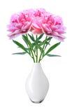 美丽的桃红色牡丹在白色隔绝的白色花瓶开花 免版税图库摄影