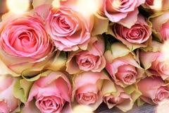 美丽的桃红色玫瑰为母亲节 库存照片