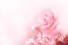美丽的桃红色玫瑰在不可思议的轻的春天 图库摄影