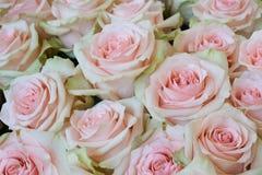 美丽的桃红色玫瑰 免版税图库摄影