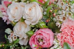 美丽的桃红色白色玫瑰开花特写镜头背景 免版税库存图片