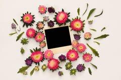 美丽的桃红色花和空的照片框架顶视图  库存图片