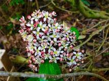 美丽的桃红色花和绿草背景 库存图片