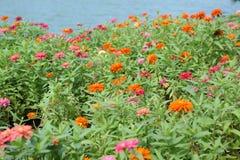 美丽的桃红色花在公园 免版税库存图片