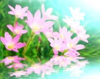 美丽的桃红色花在庭院里 免版税库存图片