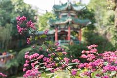 美丽的桃红色花有中国寺庙背景 免版税库存照片