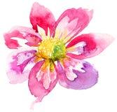 美丽的桃红色花 免版税库存图片