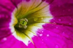 美丽的桃红色花 免版税图库摄影