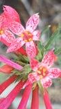 美丽的桃红色野花 免版税图库摄影