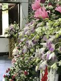 美丽的桃红色&紫罗兰色花 免版税库存图片