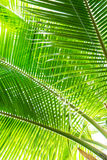 美丽的棕榈叶有一个真正的密林的背景 免版税库存照片