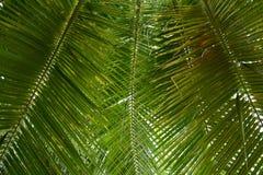 美丽的棕榈叶的样式 免版税库存照片