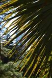 美丽的棕榈树在阳光背景的热带  库存图片