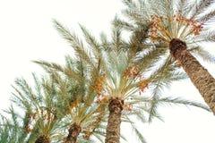 美丽的棕榈树 在异乎寻常的自然的底视图 库存照片