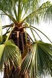 美丽的棕榈树 免版税库存照片