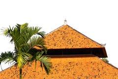 美丽的棕榈树 库存图片