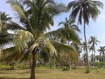 美丽的棕榈 图库摄影