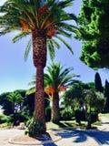 美丽的棕榈 库存照片