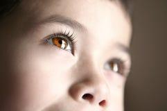 美丽的棕色眼睛 免版税库存图片