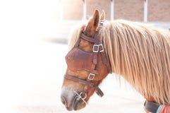美丽的棕色马,人使用的被驯化的动物作为运输 免版税库存图片