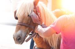 美丽的棕色马,人使用的被驯化的动物作为运输 库存图片