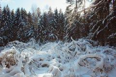 美丽的森林充满许多雪 免版税库存照片