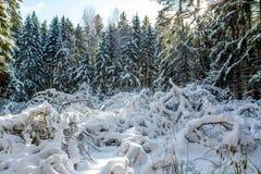 美丽的森林充满许多雪 免版税库存图片