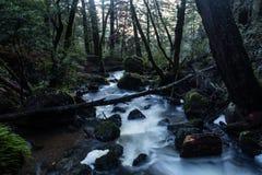 美丽的森林和小河 免版税图库摄影