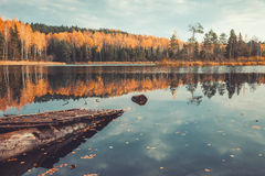 美丽的森林和老木码头在平静的湖有树的 免版税库存图片
