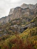 美丽的森林在一座有雾的山下的秋天 免版税库存图片