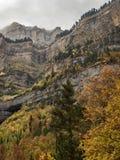 美丽的森林在一座有雾的山下的秋天 库存照片