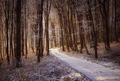 美丽的森林在与雪和阳光的冬天 免版税库存图片