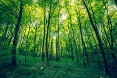 美丽的森林在春天 免版税库存照片