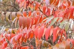 美丽的森林在秋天 免版税库存图片