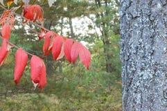 美丽的森林在秋天 库存照片