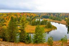 美丽的森林在秋天 免版税库存照片