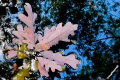 美丽的森林在秋天 库存图片