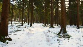 美丽的森林在Kirchschlag bei林茨的冬天在上奥地利 影视素材