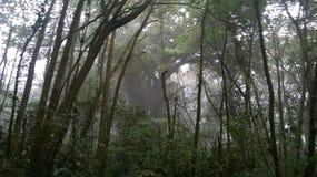 美丽的森林山的 库存照片