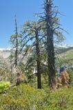 美丽的森林有对瀑布的无限看法从其中一座优胜美地国家公园山  自然旅行假日 免版税库存照片