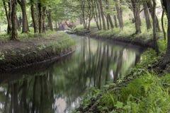 美丽的森林河 太阳射线和镇静河 Mornin 免版税库存照片