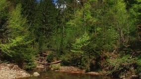 美丽的森林河 股票录像