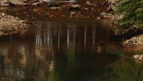 美丽的森林河 股票视频