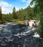 美丽的森林河 库存照片