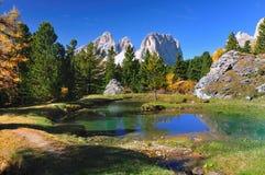 美丽的森林湖一点 免版税库存照片