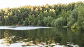 美丽的森林湖和绿色树 库存照片