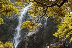美丽的森林瀑布 免版税图库摄影