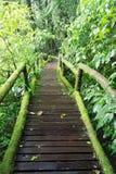 美丽的森林线索在森林里 免版税库存图片