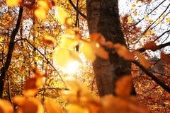 美丽的森林美丽如画的看法在好日子 库存图片