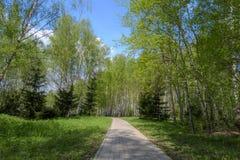 美丽的森林道路 开花的春天结构树 库存图片